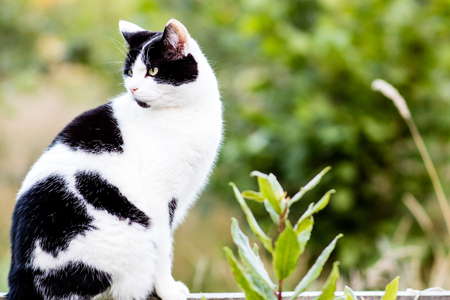 A black and white cat perched on a wooden fence.