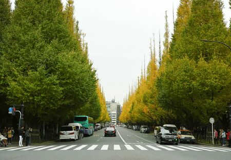 Tokyo, Japan - 11/19/2018: Jingu Gaien in Tokyo, Japan. A famous road lined with Gingko trees that goes a lovely orange in Autumn Archivio Fotografico - 132422203
