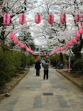 Tokyo, Japan - 03/28/2019: A park with blossoming cherry trees in the Japanese Spring Archivio Fotografico - 132422206