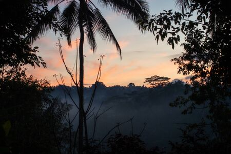 A beautiful misty sunrise over a tropical forest Archivio Fotografico - 132183502
