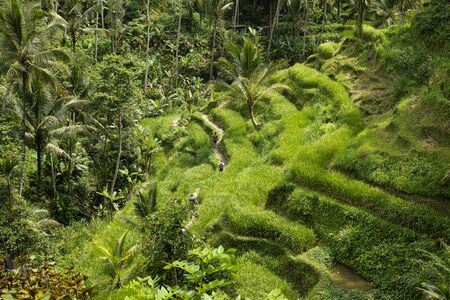 The beautiful Tegalallang rice terraces near Ubud in Bali Archivio Fotografico - 132725699