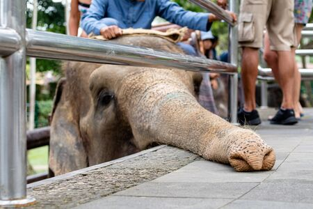 an elephant that is being used for elephant rides at a tourist attraction Archivio Fotografico - 133451829