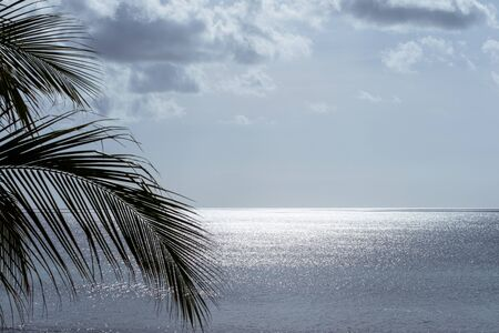A beautiful sea view with ttropical plants. Archivio Fotografico - 133451894