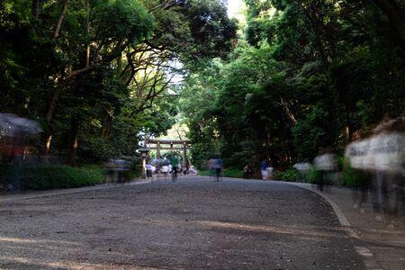 People walking through Meiji Jingu Shrine during the day