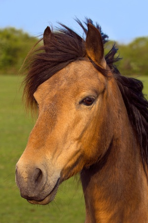 Portrait of a brown horse outdoors with green nature background. photo