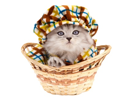 Funny kitten in a basket isolated on white backgound Stock Photo