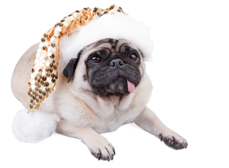 Funny pug dog laying down wearing  a christmas sparkle  hat photo