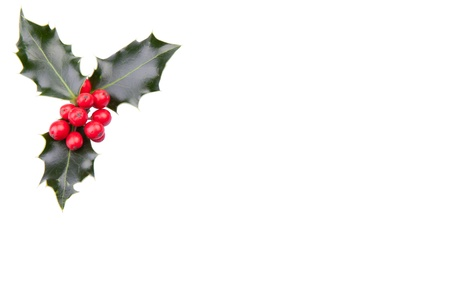 Christmas holly with red berries in the corner isolated on white Stock Photo - 11145591