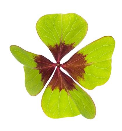 four leaf: El s�mbolo del tr�bol de cuatro hojas de la buena suerte