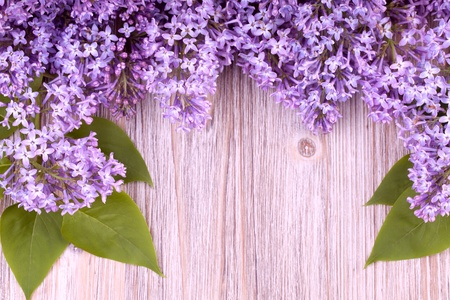 Beautiful lilac flowers on wooden  surface photo