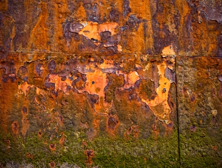 Rusty old  surface covered  by seeweed photo