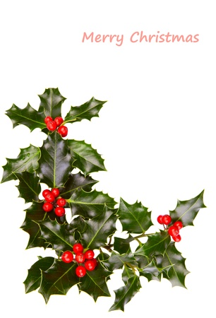 christmas holly: Christmas holly with red berries