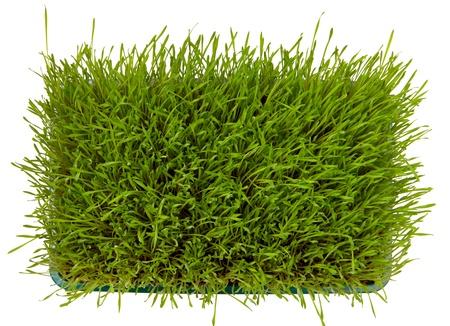 Top Blick auf frischen grünen Weizengras isoliert auf weiß
