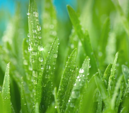 Close up of green grass with dew drops
