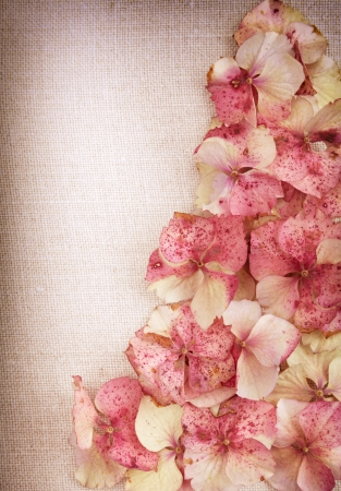 Hydrangea flower petals on vintage fabric background photo
