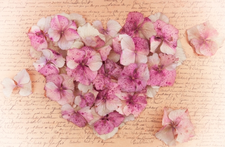Romantic pink vintage hydrangea flower petals  in the shape of a pink heart on an antique vintage paper background photo