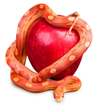 Snake wrapped around an apple isolated on white background