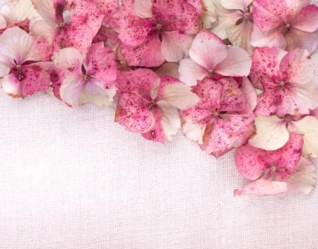 Hydrangea flower petals on vintage fabric background photo