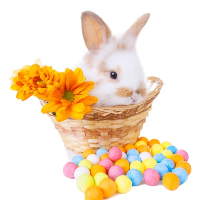 Cute bunny in a basket with flowers and colorful decorations isolated on white photo