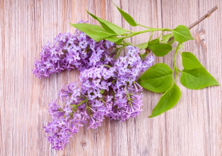 Branch of beautiful lilac flowers on wooden  surface photo