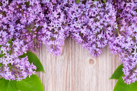 Frame of lilas on wooden surface photo