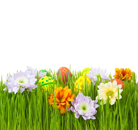 Easter eggs and flowers in green grass, isolated on top photo