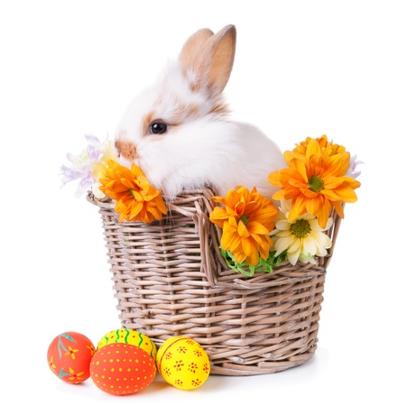 Cute white bunny sitting  in a basket with flowers and colorful easter eggs, isolated on white photo