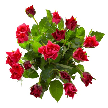 Top view of  red roses bouquet isolated on white background
