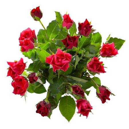 Top Blick auf rote Rosen-Bouquet isoliert auf weißem Hintergrund