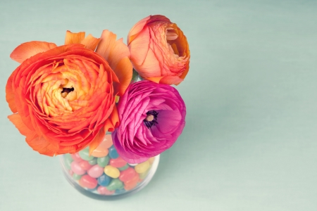 Pink and orange colorful ranunculus in a vase decorated by a sweets on vintage blue background  photo