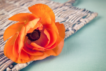 Orange ranunculus flower on a wicker tray on vintage background photo