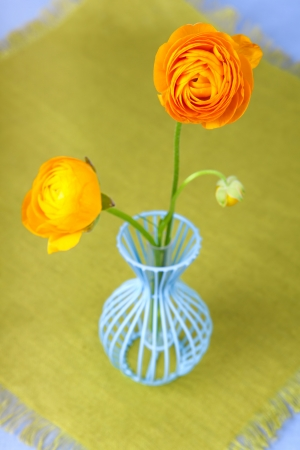 Yellow ranunculus flowers in a blue vase  photo