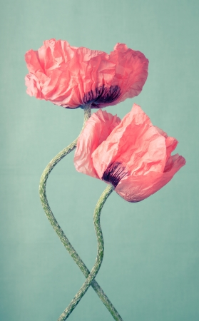 Two pink poppy flowers on a green vintage background Stock Photo