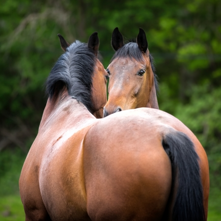 Two twin 6 year old horses standing  beside each other
