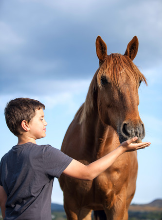 honorable: A happy child feeding a hungry and honorable horse