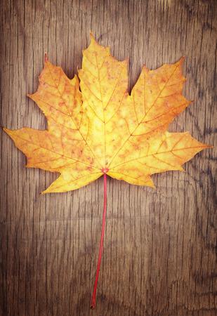 gold color: Autumn gold color leaf on wooden background