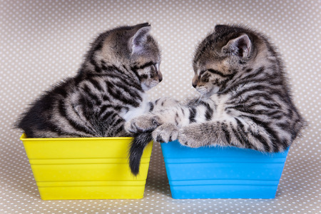 backround: Two young kittens looking at each other while in trays on poka dot backround