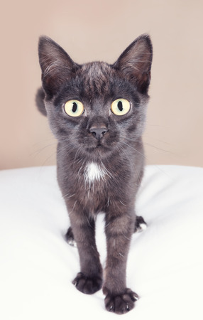A curious black kitten looking at you photo