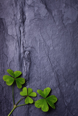 Three lucky clovers on a beautiful tile background photo