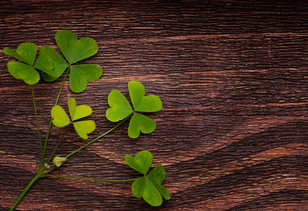 shamrock: Five lucky shamrocks on a old wood vintage background Stock Photo