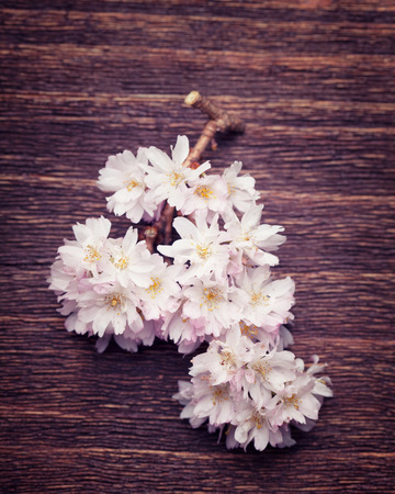 Beautiful spring flowers on a vintage wood background photo
