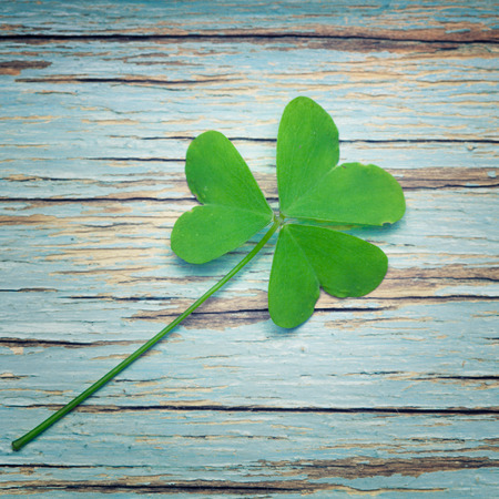 One lucky clover on a blue vintage wood background photo