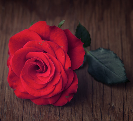backround: A vivid romantic red rose with green petals on a vintage wood backround