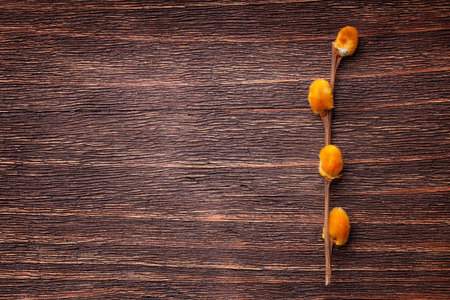 pussy willow: Orange pussy-willow flowers on a vintage wood background Stock Photo