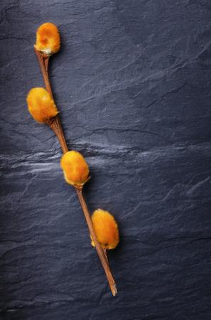 crack willow: Orange pussy-willow on a vintage dark tile slate background