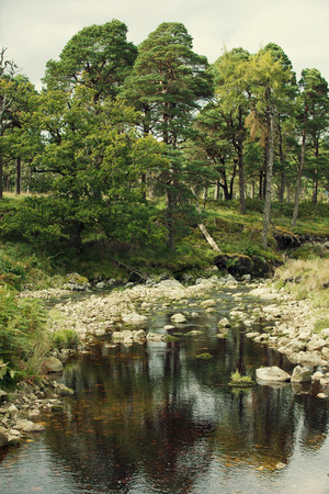 traditonal: A traditonal irish river in the middle of the forest Stock Photo