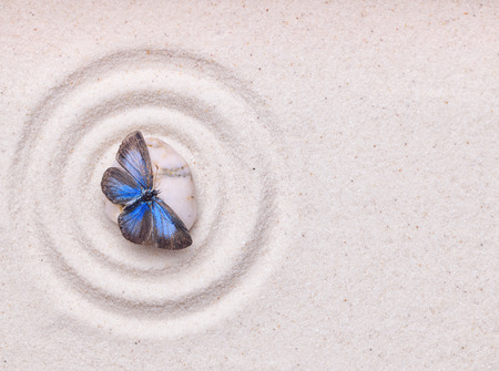 A blue vivid butterfly on a zen stone with circle patterns on the white grain sand Standard-Bild