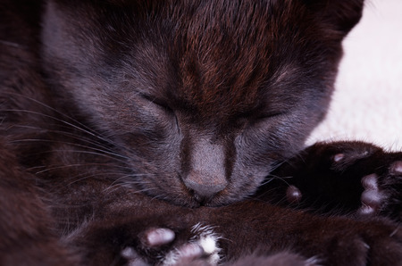 peacefully: A black cat sleeping peacefully