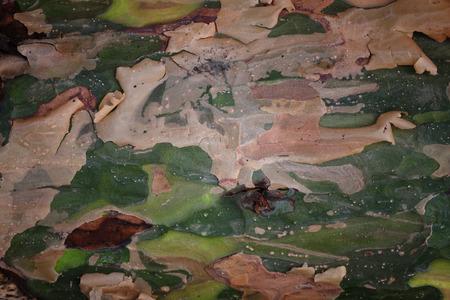 pealing: Camouflage wood bark