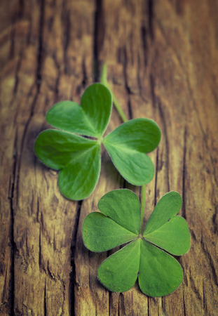 clovers: Two lucky clovers on a vintage wood background